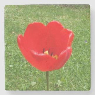 Pretty Red Tulip Stone Coaster