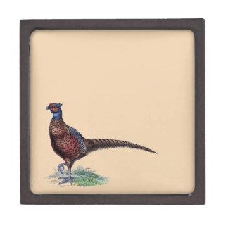 Pretty Ring Neck Pheasant Tan Premium Gift Box