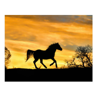 Pretty Running Horse at Sunset Postcard