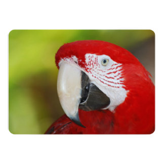 Pretty Scarlet Macaw 5x7 Paper Invitation Card