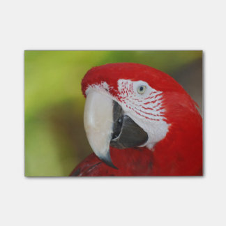 Pretty Scarlet Macaw Post-it® Notes