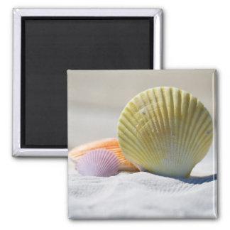 Pretty Seashells Magnet