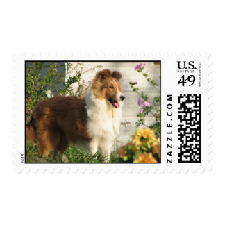 Pretty sheltie standing in flowers-stamp postage stamp