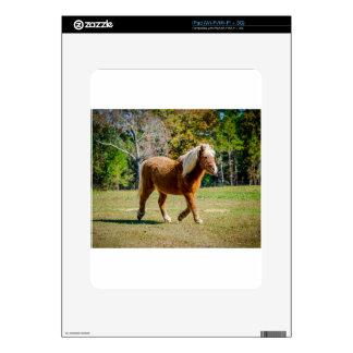 Pretty Shetland Pony Skin For The iPad
