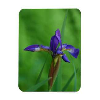 Pretty Siberian Iris Flexible Magnets
