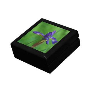 Pretty Siberian Iris Keepsake Box