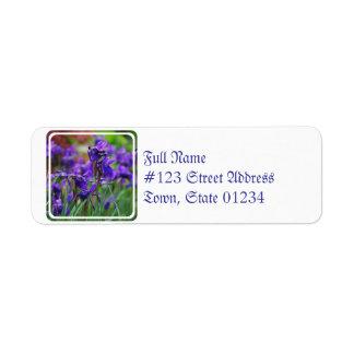 Pretty Siberian Iris Label