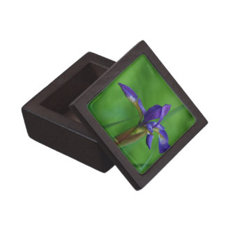 Pretty Siberian Iris Premium Gift Box