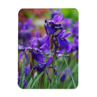 Pretty Siberian Iris Rectangular Magnets