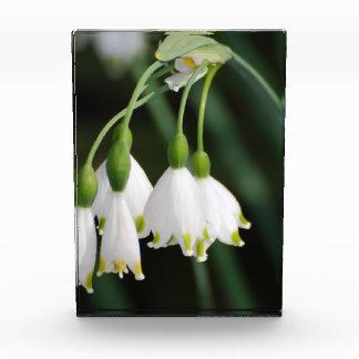 Pretty Snow Drop Lilies Acrylic Award