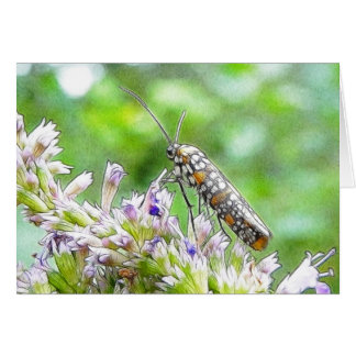 Pretty Spotted Ermine Moth on Agastache Card