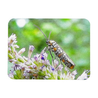 Pretty Spotted Ermine Moth on Agastache Magnet