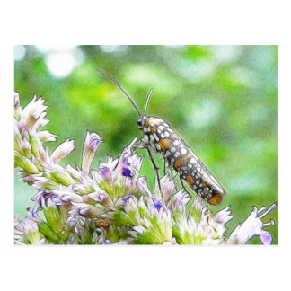 Pretty Spotted Ermine Moth on Agastache Post Card
