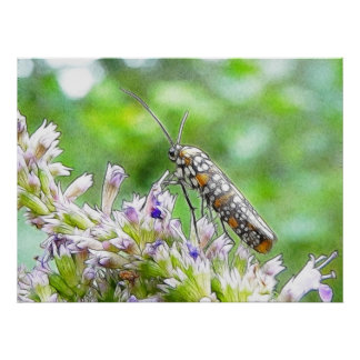 Pretty Spotted Ermine Moth on Agastache Print