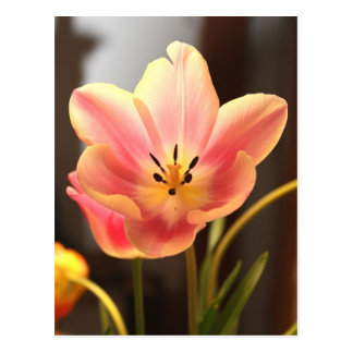 Pretty Spring Tulip Postcard