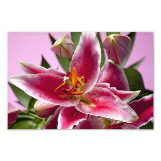 Pretty Stargazer Lilies Art Photo