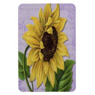 Pretty Sunflower On Sheet Music Magnet