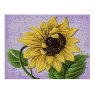 Pretty Sunflower On Sheet Music Postcard