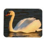 Pretty Swan Flexible Magnet Magnet