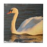 Pretty Swan Tile