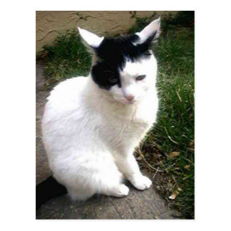 Pretty Sweet White And black Kitty Cat Postcard