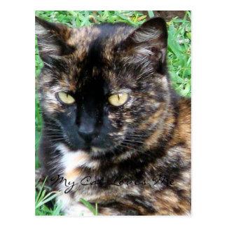 Pretty Tiger Kitty Postcard