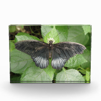 Pretty Tropical  Butterfly and Flowers Decorative Acrylic Award
