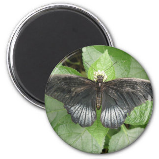 Pretty Tropical Butterfly and Flowers Magnet