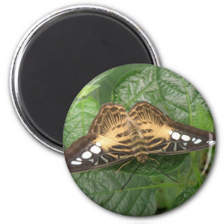 Pretty Tropical Clipper Butterfly Magnet
