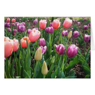 Pretty Tulips, blank Card