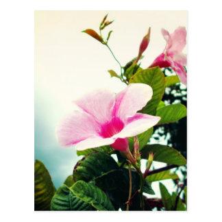 Pretty vibrant pink flowers postcard