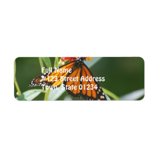 Pretty Viceroy Butterfly Labels