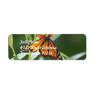Pretty Viceroy Butterfly Return Address Label