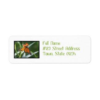 Pretty Viceroy Butterfly Custom Return Address Label
