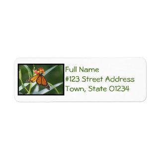 Pretty Viceroy Butterfly Return Address Labels