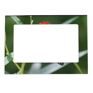 Pretty Viceroy Butterfly Magnetic Picture Frame