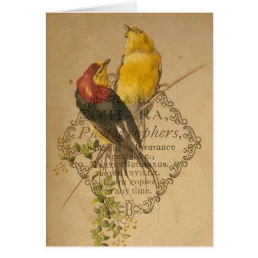 Pretty Vintage Birds Greeting Card