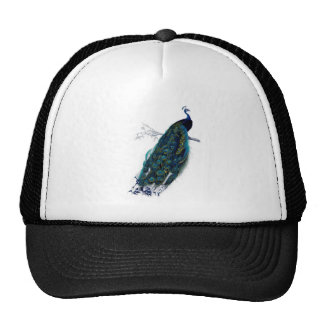 Pretty vintage peacock, beautiful feathers trucker hat