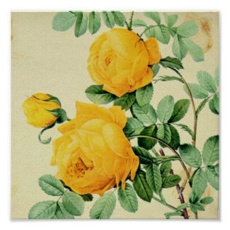 Pretty Vintage Yellow Roses Square Crop print