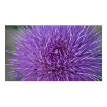 Pretty wayleaf purple thistle flower plant business card