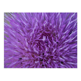 Pretty wayleaf purple thistle flower plant postcard