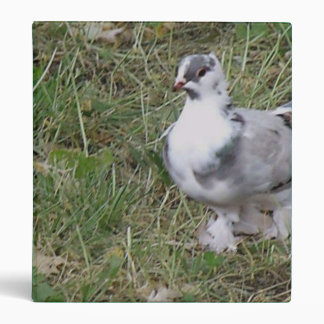 Pretty White and Gray Fancy Feather Footed Pigeon Binder