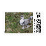 Pretty White and Gray Fancy Feather Footed Pigeon Postage Stamp