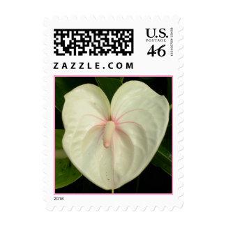 Pretty White Anthurium Stamp