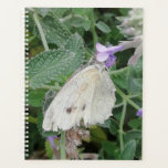 "Pretty white butterfly on catmint. planner<br><div class=""desc"">Taken in my garden feeding butterfly.</div>"