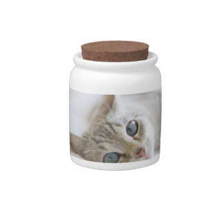 Pretty white cat with blue eyes laying on couch candy jar