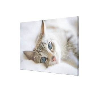 Pretty white cat with blue eyes laying on couch canvas print