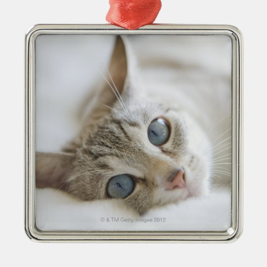 Pretty white cat with blue eyes laying on couch metal ornament