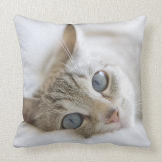 Pretty white cat with blue eyes laying on couch pillows