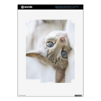 Pretty white cat with blue eyes laying on couch skins for iPad 3